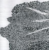 Rimgaudo ir Dangirutės Maleckų abstrakti fotografika