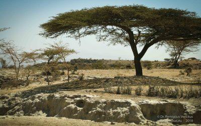 Pokalbis apie Etiopiją